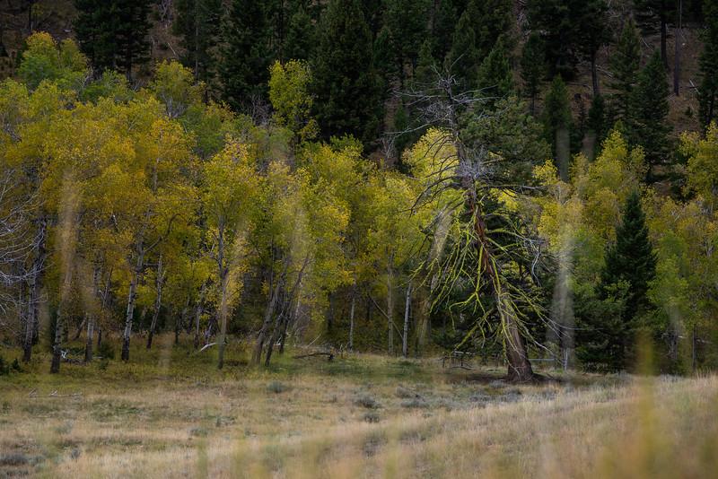 Montana_2019-0831