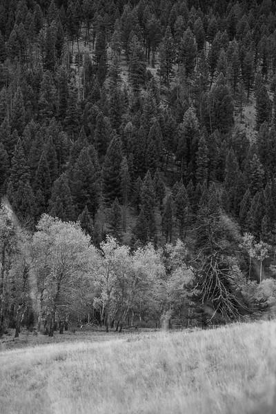 Montana_2019-0856