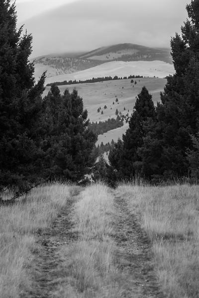 Montana_2019-0772