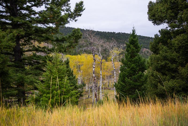 Montana_2019-0873