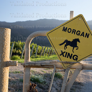 Morgan Vineyard-115