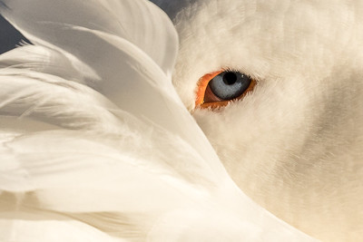 Stare of Peace