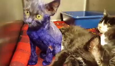 Smurf and Cherry