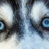 Rylee Eyes