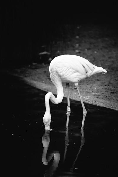 The Lonely Flamingo