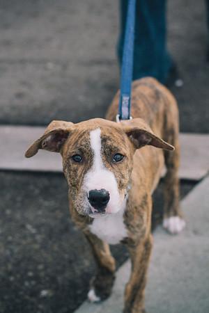 SPCA Puppy Walk - Queens Wharf. Please find more info at www.wellingtonspca.org.nz/