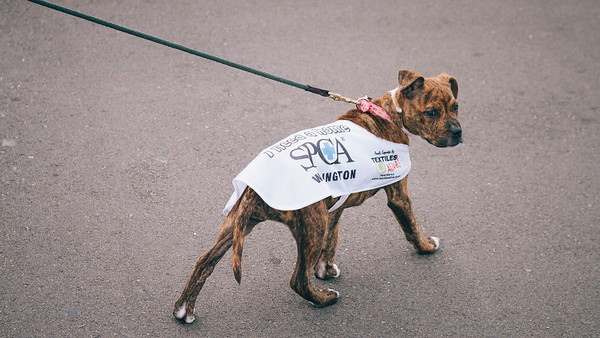 SPCA Puppy Walk - Queens Wharf. Please find more info at www.wellingtonspca.org.nz/