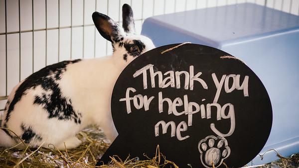 SPCA Wellington - Street Appeal