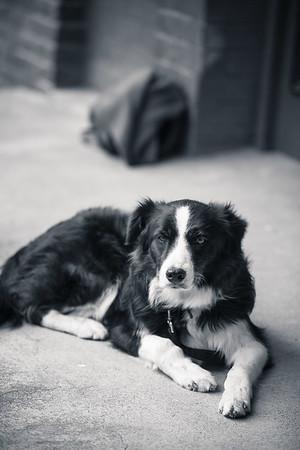 SPCA Wellington - Open Day
