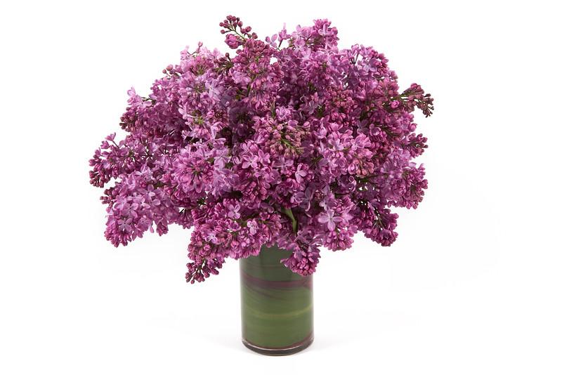 """Flowers by  <a href=""""http://www.StephenCampanella.com"""">http://www.StephenCampanella.com</a>"""