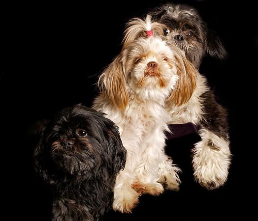 Max, Sussi & .. where's Gizmo?