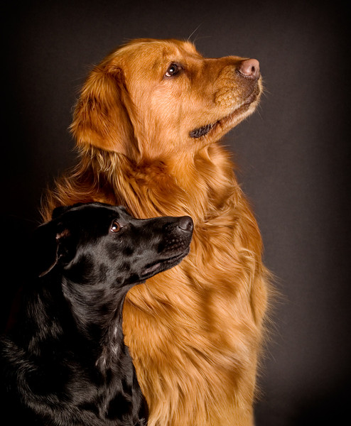 Ella & Dakota in profile.