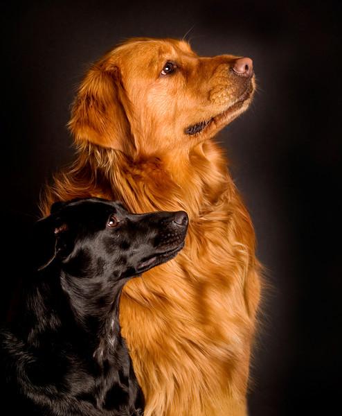 Ella & Dakota in profile, (a little more red).