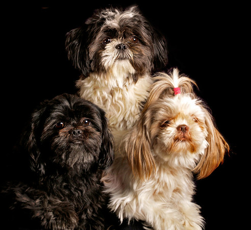 Here is Max, Sussi, and their son, Gizmo ....