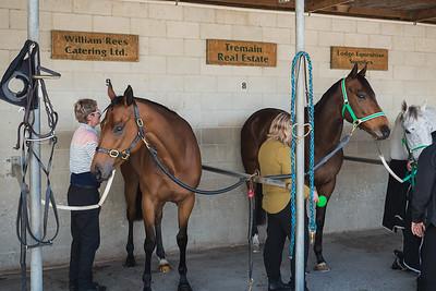The Races - Livamol Classic, Hasting Racecourse