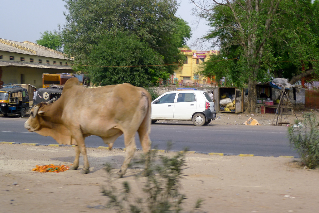 Another cow on the road