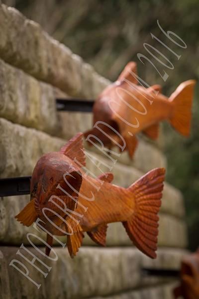 fish1862 shrp