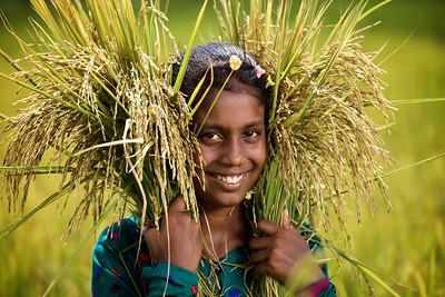 IRRI Harvest,