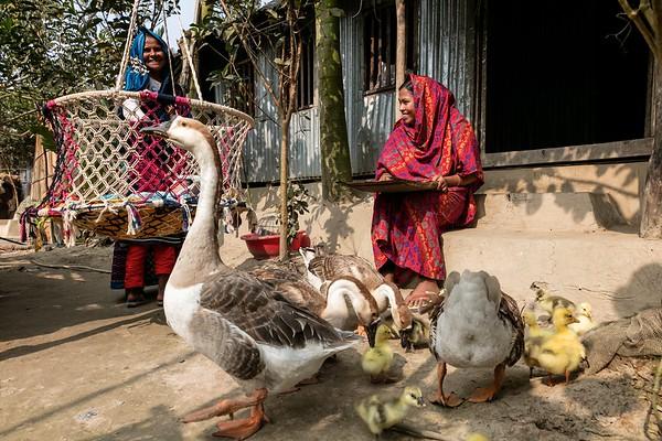 0007-0009 Nasima Begum (mother in law) taking care of pet ducks. Nipa Begum (20) is doing some household work, her mother in Law Nasima Begum is helping her  Hoglabunia Village, Dakua Union, Golachipa upazilla, Patuakhali district. Bangladesh.  Photo Credit: b.a.sujaN / Map / WRA