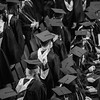 024_Jared_GraduationBW