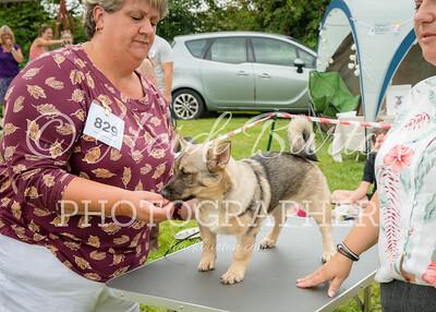 20190804-Fun Dog Show-0032