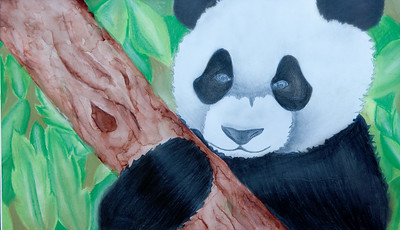 Kaleigh - Panda