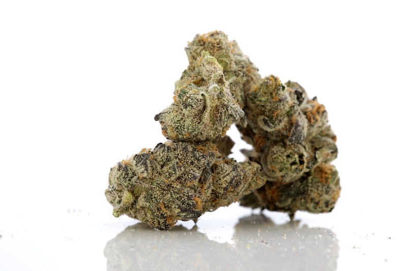BR4A1583 MultiTop Farm Galactic Cookies ( Bred by Bay Exclusive ) copy