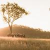 730_Bride_and_Groom_She_Said_Yes_Wedding_Photography_Brisbane