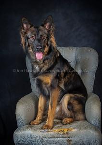 DogFest16Sat - 018