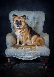 DogFest16Sat - 042