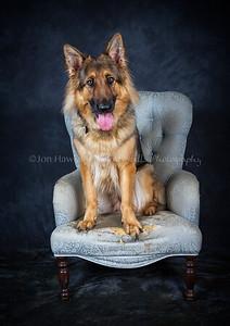 DogFest16Sat - 030