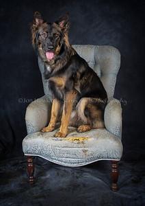 DogFest16Sat - 019