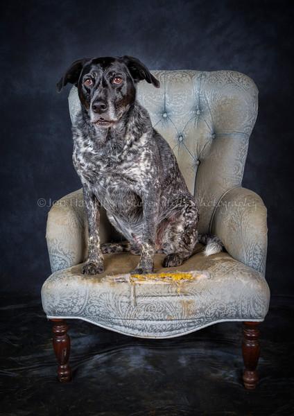 DogFest16Sat - 038