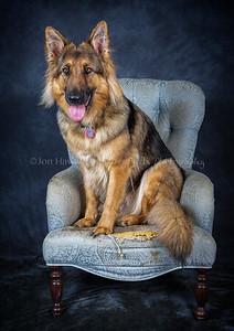 DogFest16Sat - 029