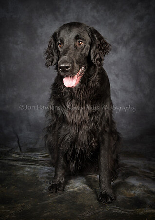 DogFest16Sat - 027
