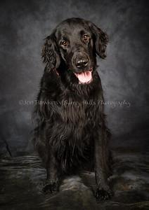 DogFest16Sat - 028
