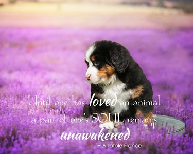 Lavender Fields-soul