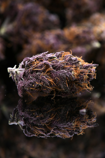 Buckey Purple Head Stash Horticulture -29