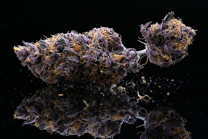 Buckey Purple Head Stash Horticulture -34