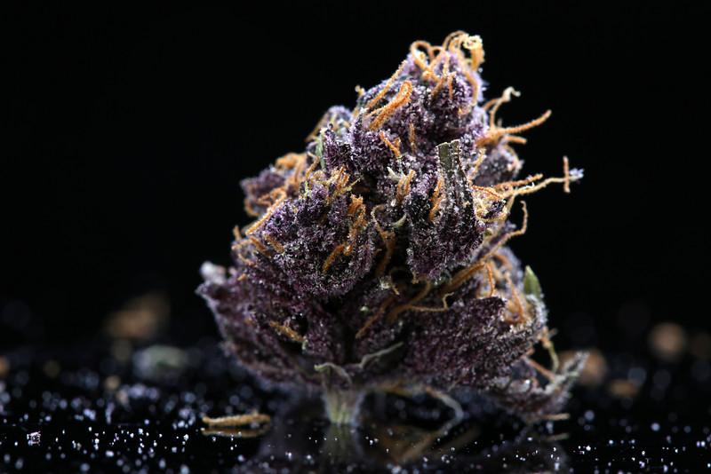 Buckey Purple Head Stash Horticulture -43