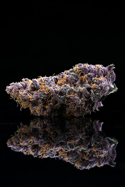 Buckey Purple Head Stash Horticulture -16