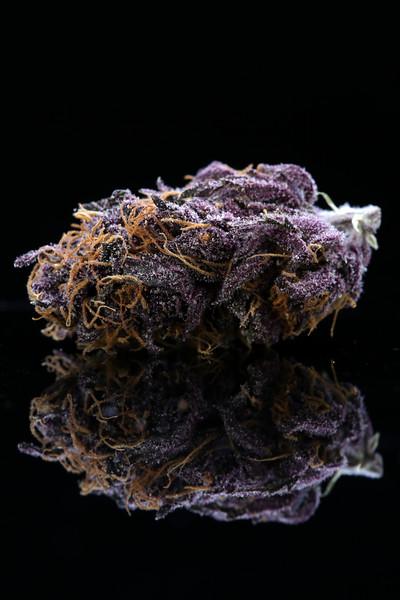 Buckey Purple Head Stash Horticulture -11
