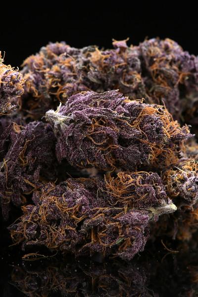 Buckey Purple Head Stash Horticulture -30