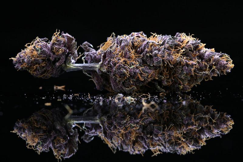 Buckey Purple Head Stash Horticulture -32