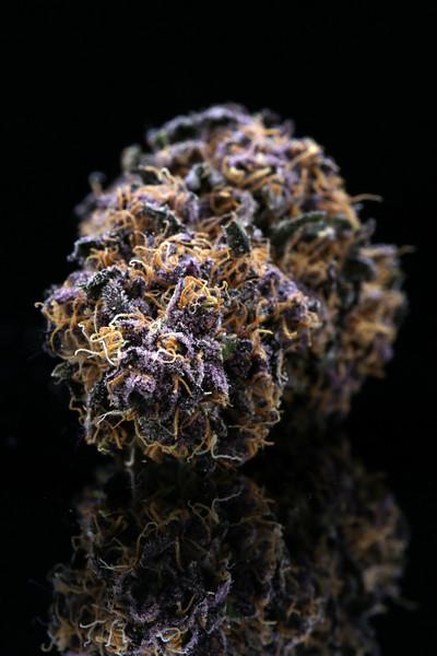 Buckey Purple Head Stash Horticulture -5