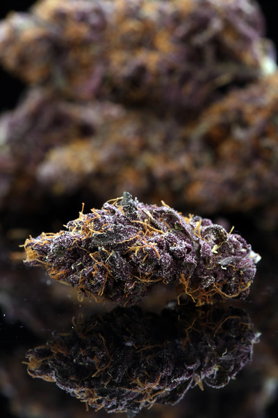 Buckey Purple Head Stash Horticulture -24
