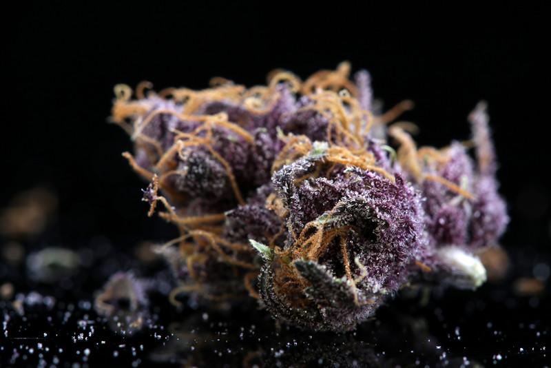 Buckey Purple Head Stash Horticulture -42