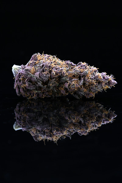 Buckey Purple Head Stash Horticulture -1