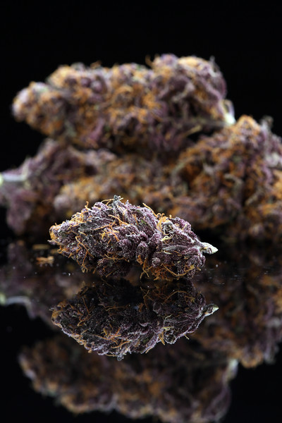 Buckey Purple Head Stash Horticulture -21