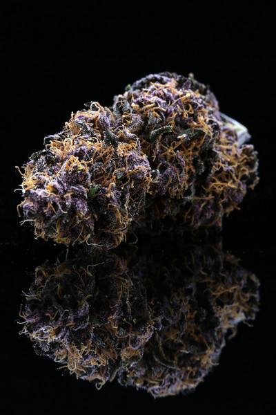 Buckey Purple Head Stash Horticulture -6